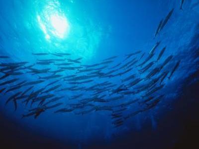 Hydrolyzed Fish Fertilizer