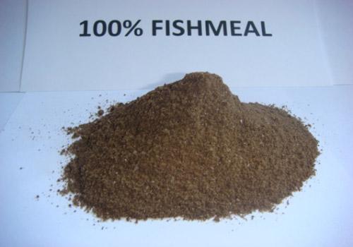 100% Fishmeal
