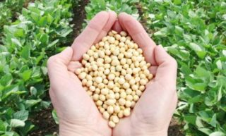 Organic Soybean Meal – Sigma Marine Proteins & Organic Fertilizers